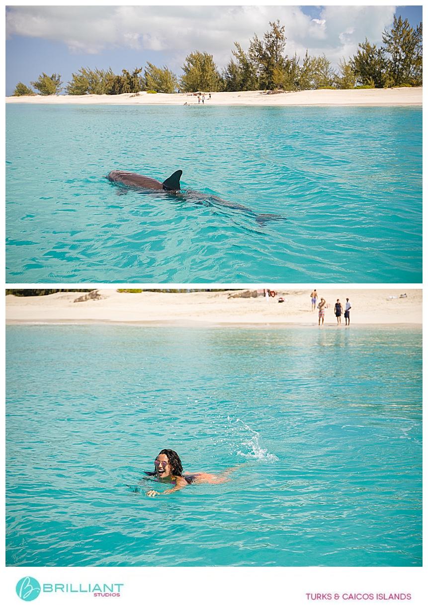 Jo Jo the dolphin